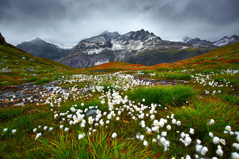 Mountain Landscape Meadow. Mountain Landscape and white flowers on the meadow royalty free stock photo