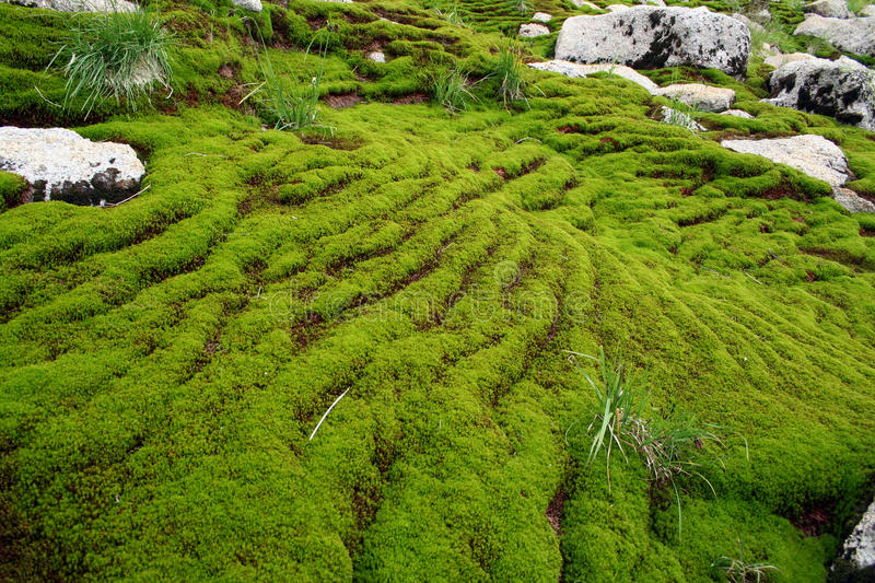 Mountain landscape in a moss stock images