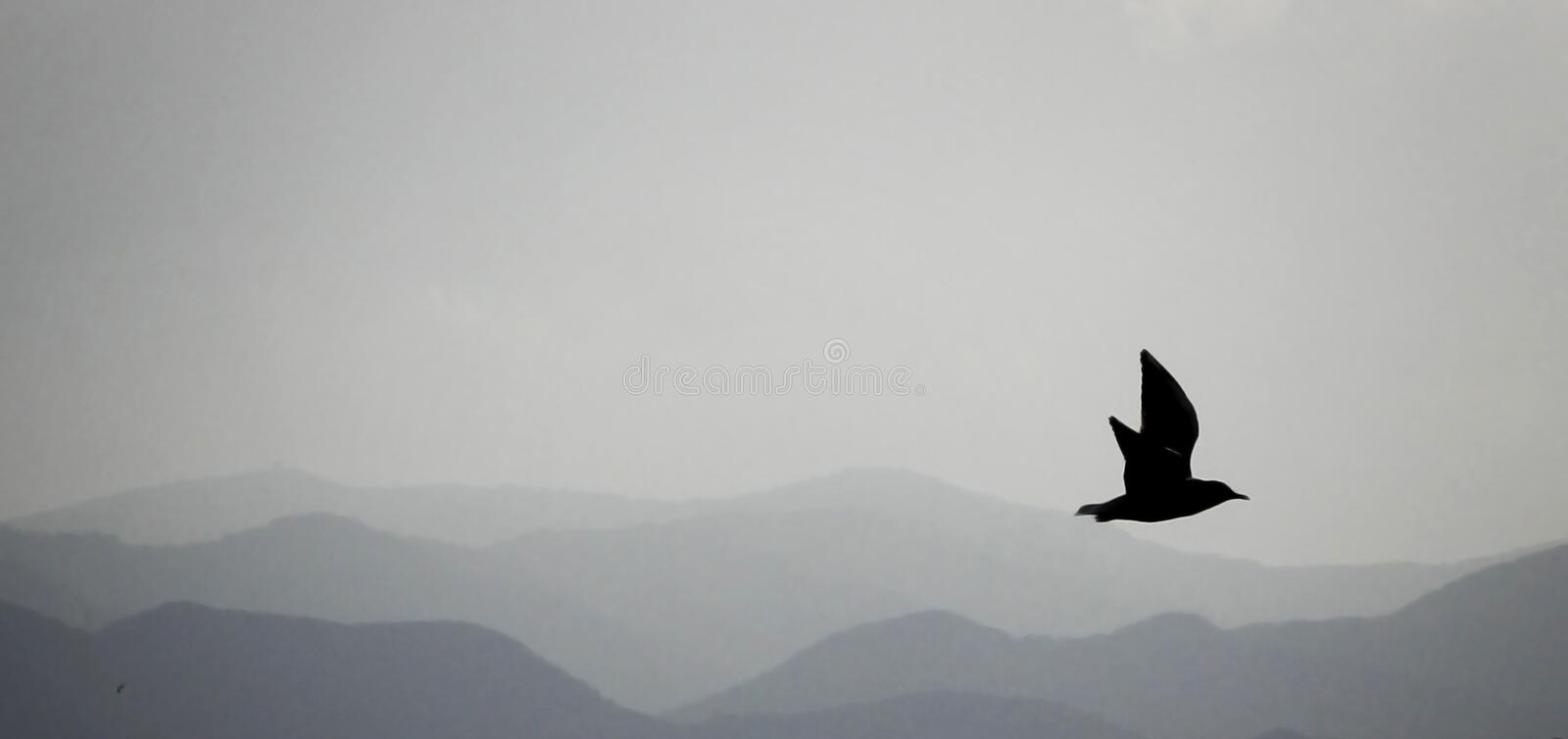 Mountain landscape and silhouette of a flying bird in the background royalty free stock photos