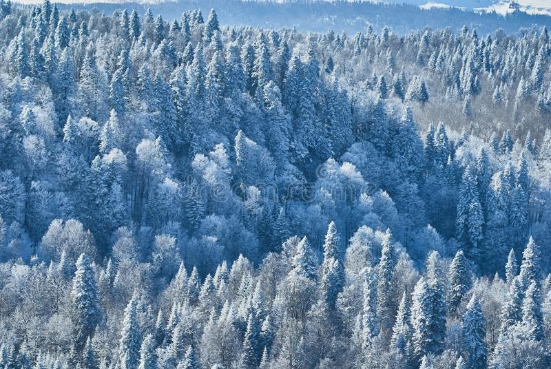 Mountain landscape. Snow-covered dense forest of firs. Lago-Naki, The Main Caucasian Ridge, Russia.  stock image