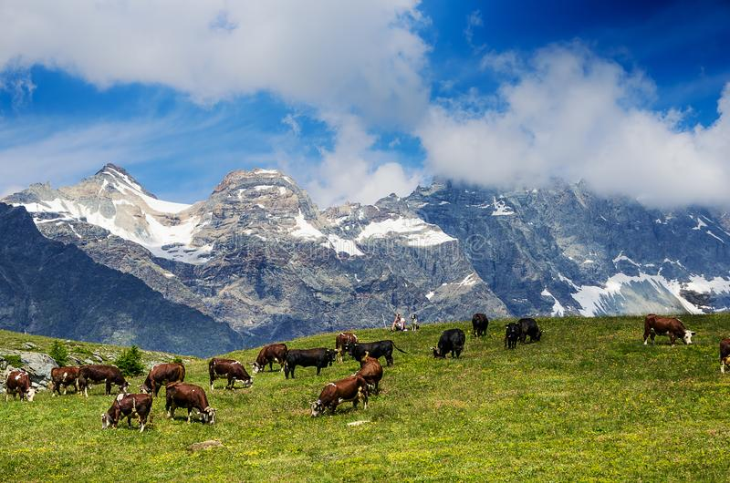 Mountain landscape, some cows grazing in a cloudy day. Some cows grazing in a cloudy day in a mountain stock image