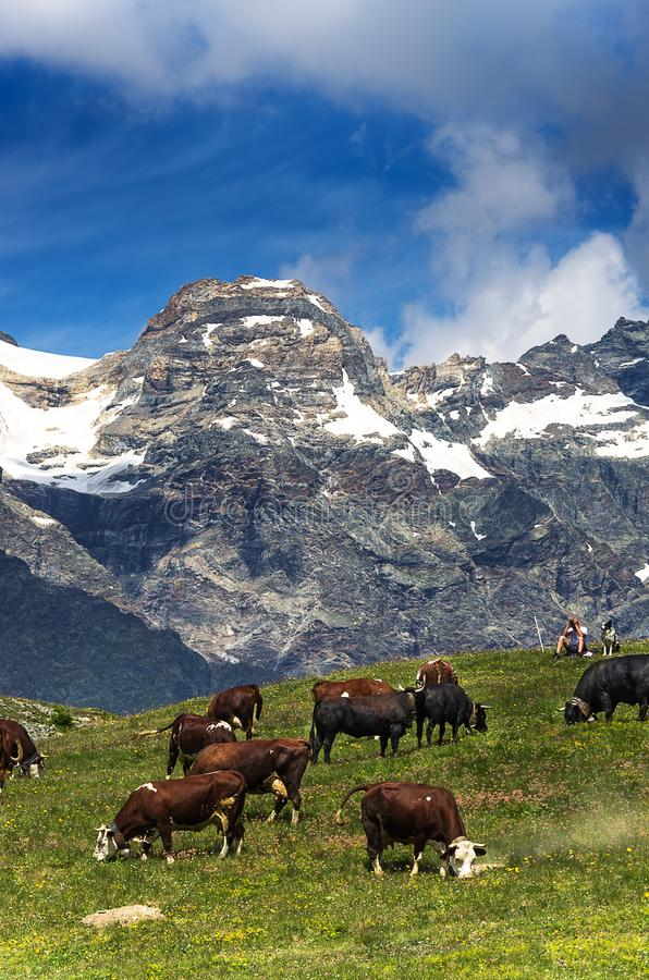 Mountain landscape, some cows grazing in a cloudy day stock photos