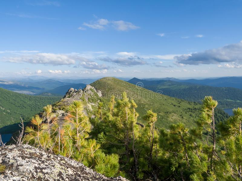 Mountain landscape. Young cedars on top of the mountain. Sunny day in the mountains of the Western Sayan stock images