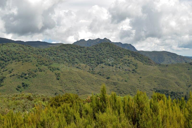 The mountain landscapes of Mutarakwa Forest, Kenya. The mountain landscapes Mutarakwa Forest in Aberdare Ranges, Kenya royalty free stock photo