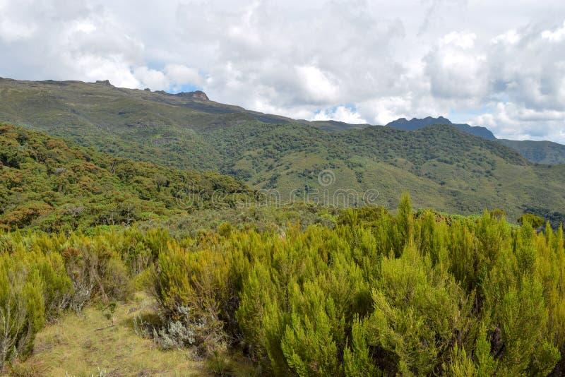 The mountain landscapes of Mutarakwa Forest, Kenya. The mountain landscapes Mutarakwa Forest in Aberdare Ranges, Kenya stock image