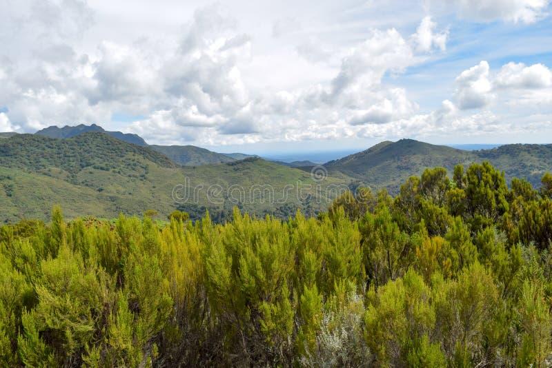 The mountain landscapes of Mutarakwa Forest, Kenya. The mountain landscapes Mutarakwa Forest in Aberdare Ranges, Kenya royalty free stock images