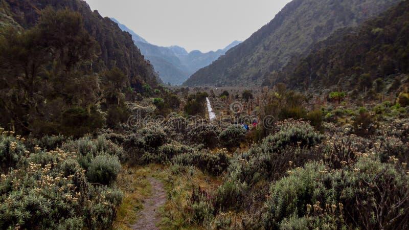 Mountain landscapes in the Rwenzori Mountains. The foggy landscapes in the bujuku valley in the rwenzori mountain range, uganda, trek, nature, outdoors, hike stock photos