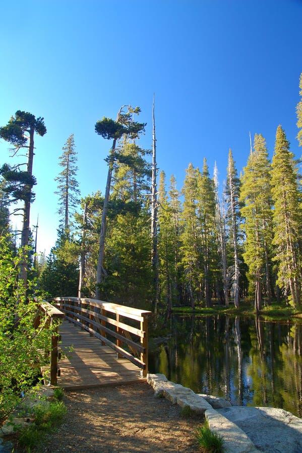 mountain leśna wiosny zdjęcia stock