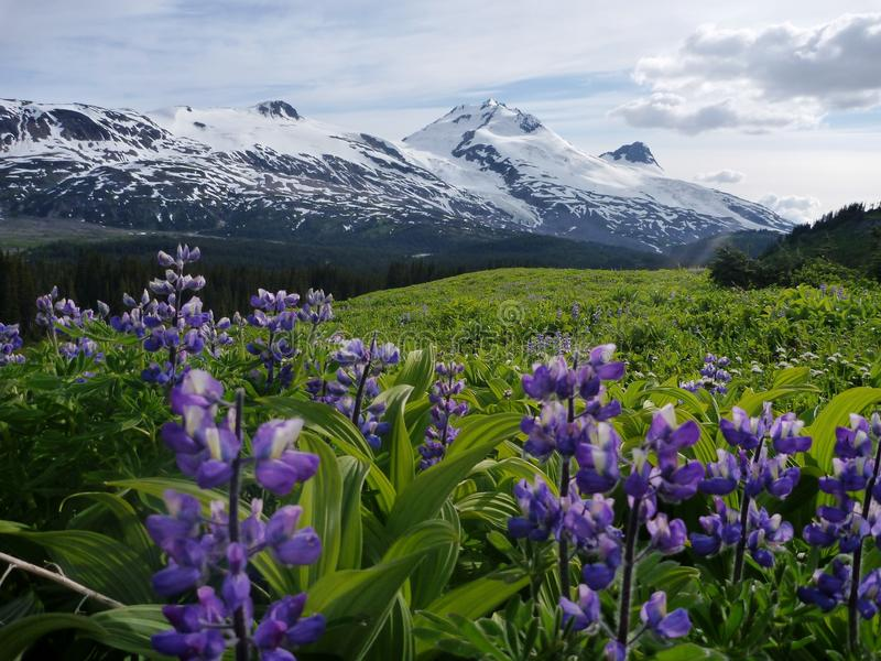 Download Mountain meadow stock image. Image of breeze, serene - 22333161