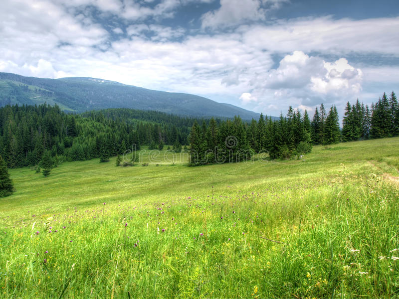 Mountain meadow royalty free stock photography