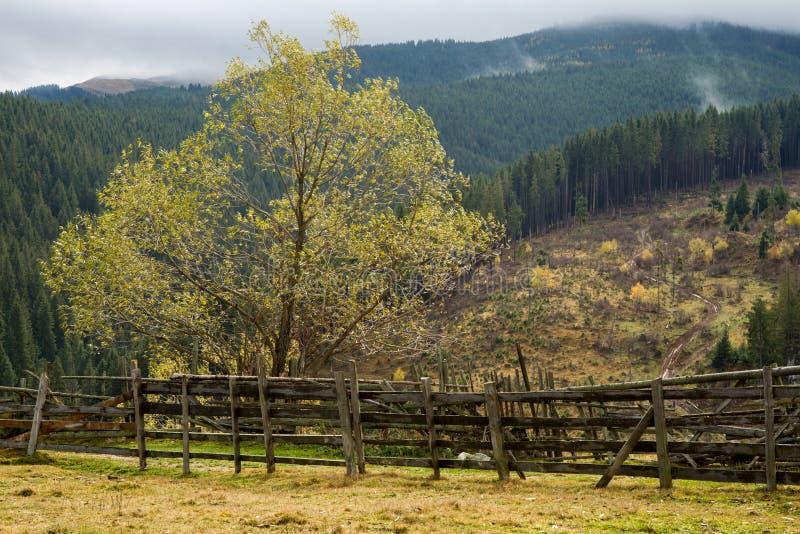 Mountain meadow stock photography