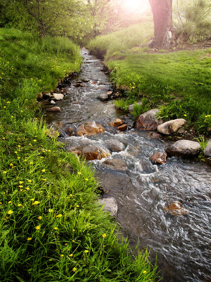 Mountain Meadow with Creek