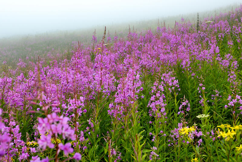 Mountain meadow in fog stock photo