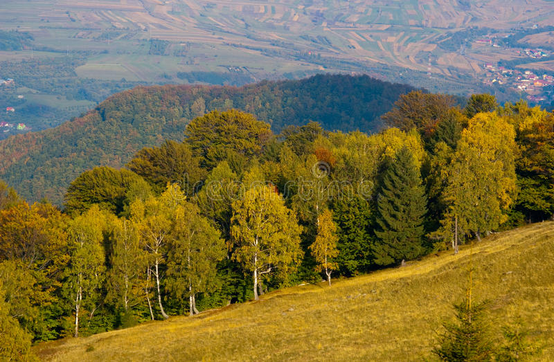 Download Mountain Meadow And Forest In Autumn Stock Photo - Image: 11230026