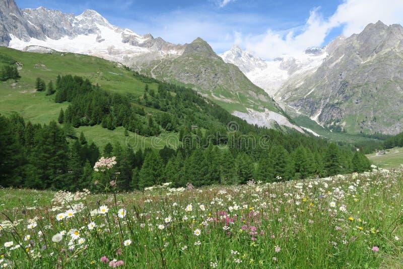 Mountain meadow royalty free stock photos