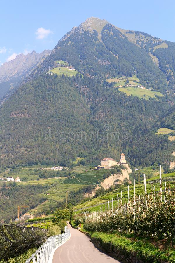 Mountain Mutspitze, apple trees and Tyrol Castle in Tirol, South Tyrol stock images