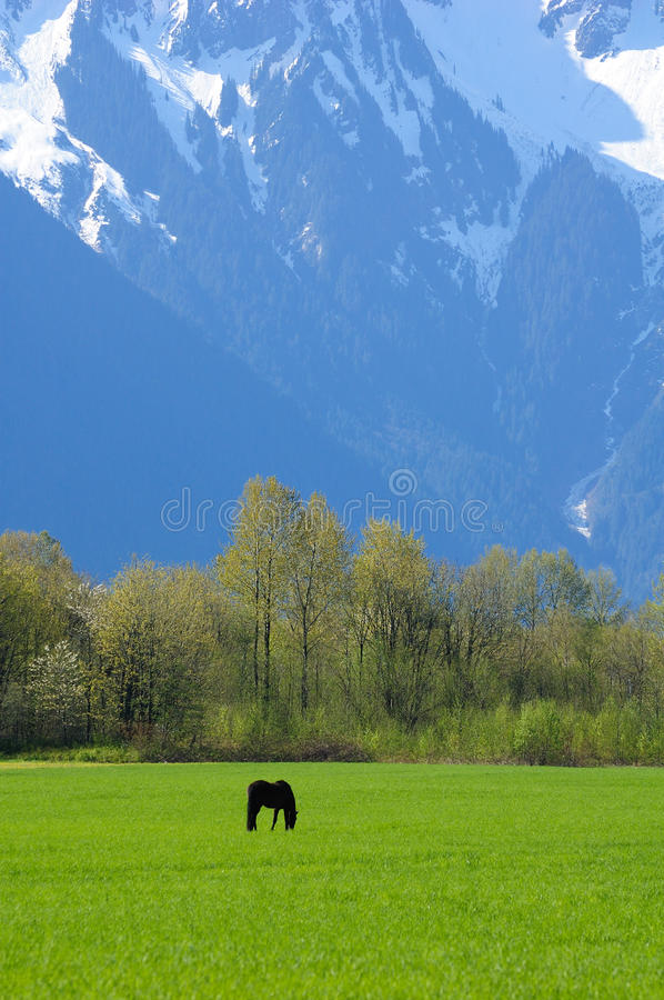 Mountain and pasture royalty free stock image