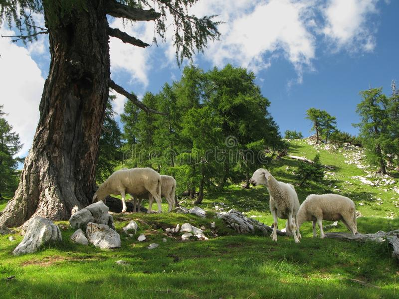 Mountain Pasture In Julian Alps Royalty Free Stock Images
