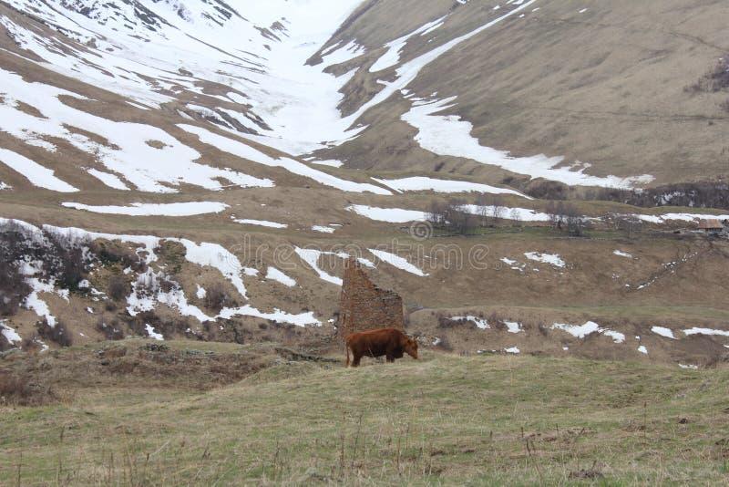 Mountain pastures and livestock stock photo