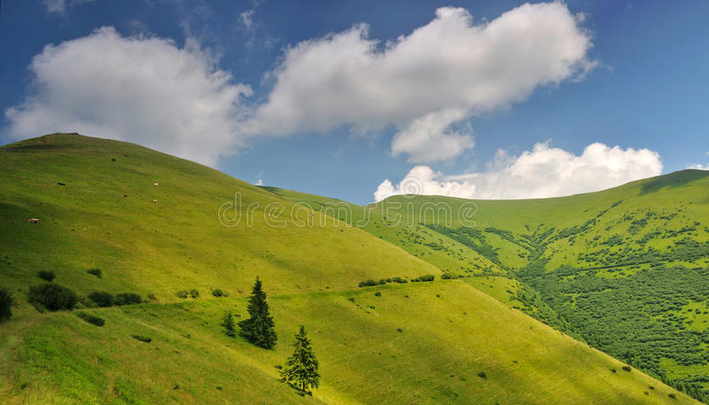 Mountain pastures in Ukraine royalty free stock images