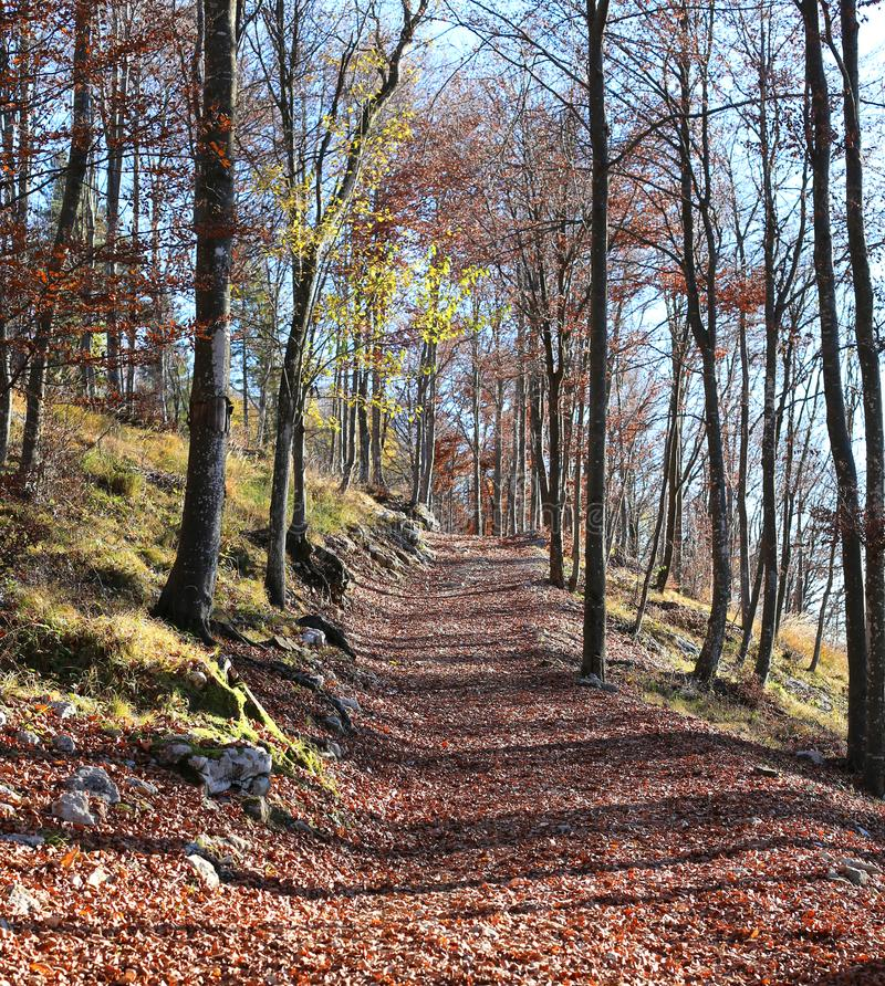Mountain path in the autumn trees with the dried leaves. Mountain path in the autumn trees with the dried yellow and red leaves royalty free stock photo