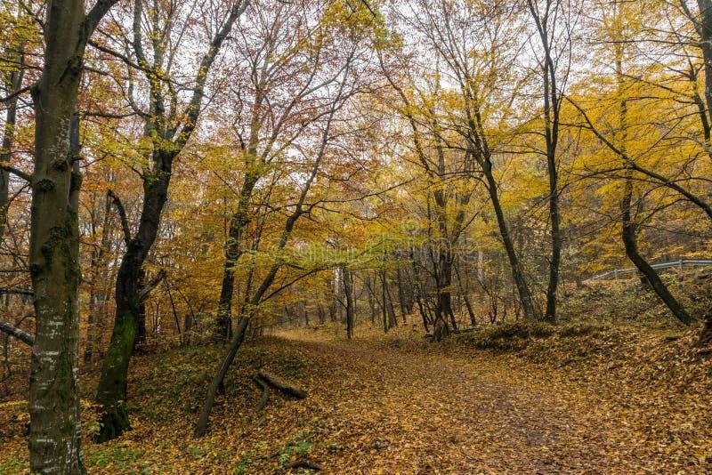 Mountain path and Autumn trees, Vitosha Mountain, Bulgaria. Mountain path and Autumn trees, Vitosha Mountain, Sofia City Region, Bulgaria royalty free stock photo