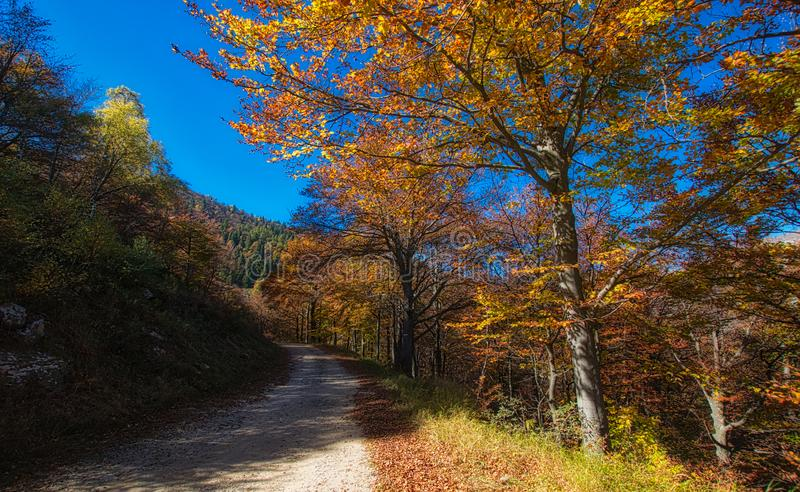 Mountain path- Bielmonte BI-Italy stock images