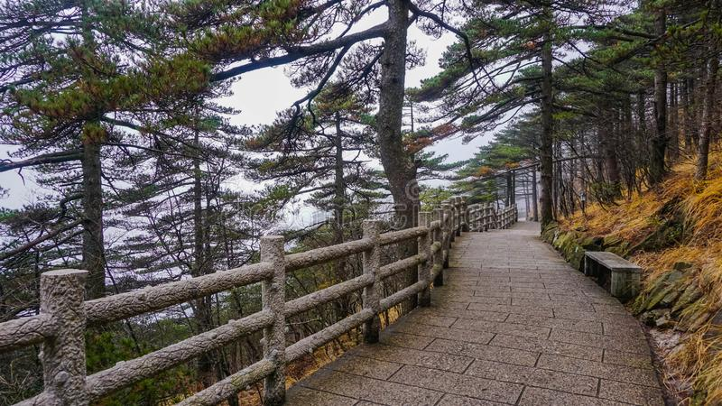 Mountain paths in the Huangshan National Park. China. Wild forest stock photography