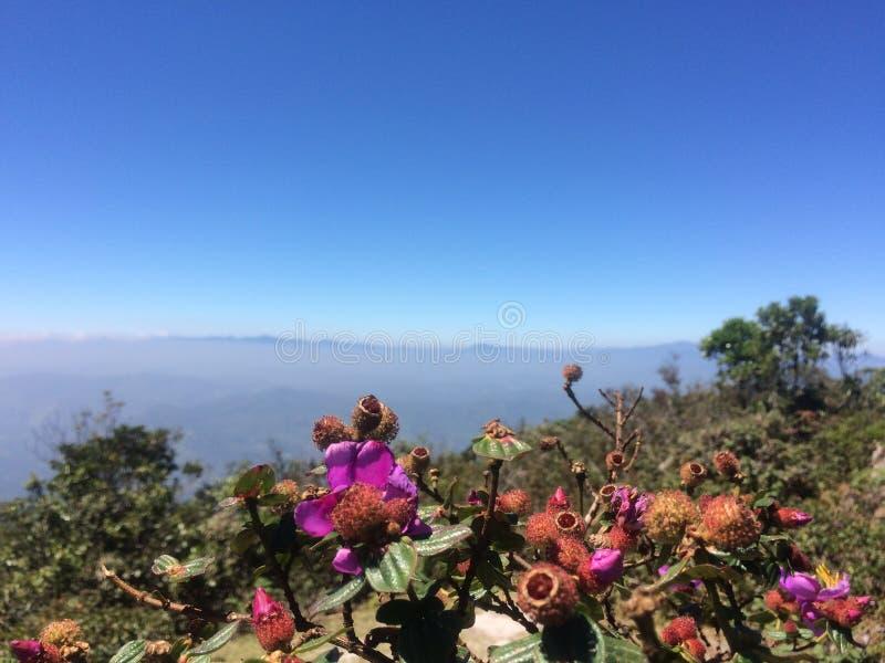 Mountain peak with flowers stock image