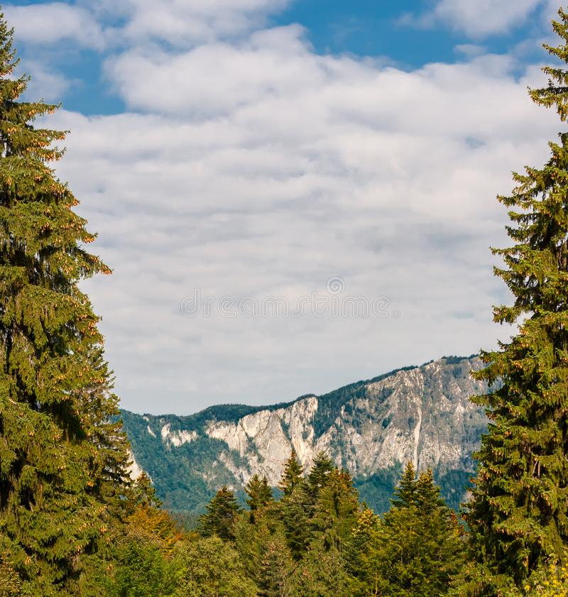 Mountain peaks and fir trees in warm sunlight and dramatic sky royalty free stock photos