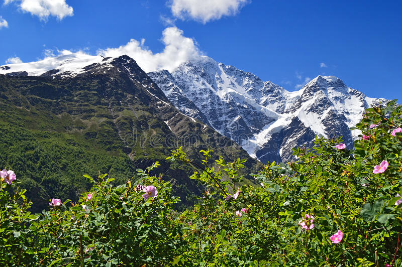 Mountain peaks and flowering bushes stock photo