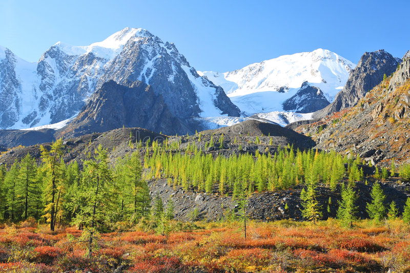 Mountain Peaks And Larch Forest Stock Images