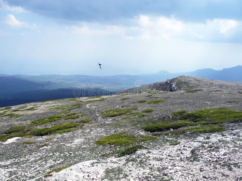 Mountain plateau with trail, flying bird. Crimean mountains royalty free stock photos