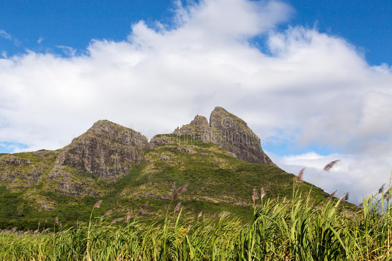 Mountain range in Mauritius with sugar cane field.  stock photos