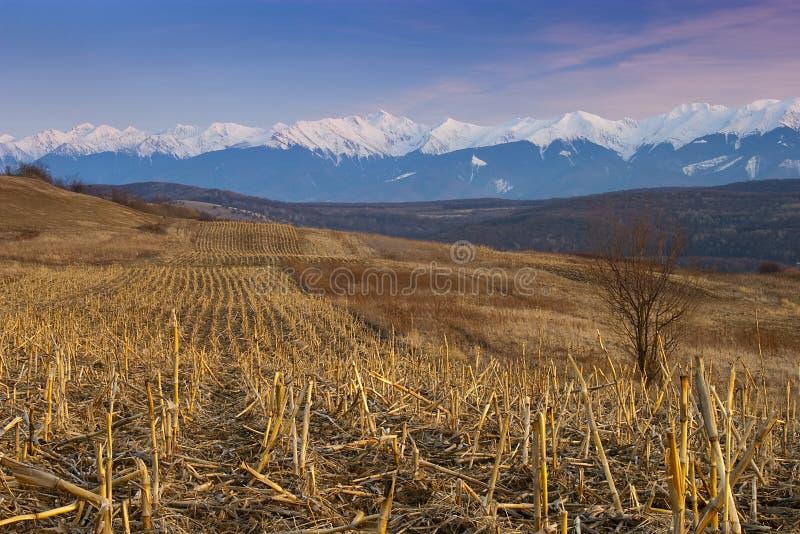 Download Mountain Range Snow Peaks Plowed Field Stock Photo - Image: 13148352