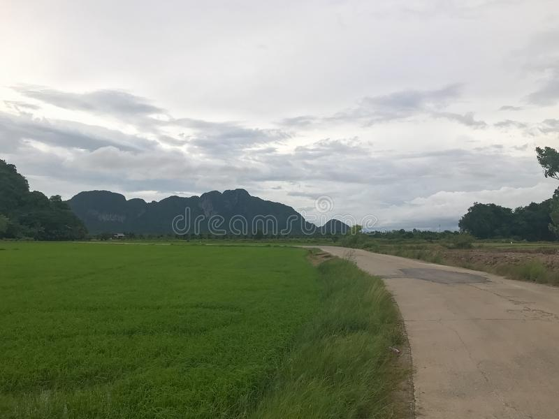 Mountain and rice field at Phatthalung. Thailand royalty free stock image