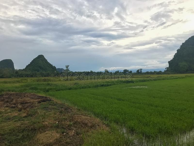 Mountain and rice field at Phatthalung. Thailand royalty free stock photography