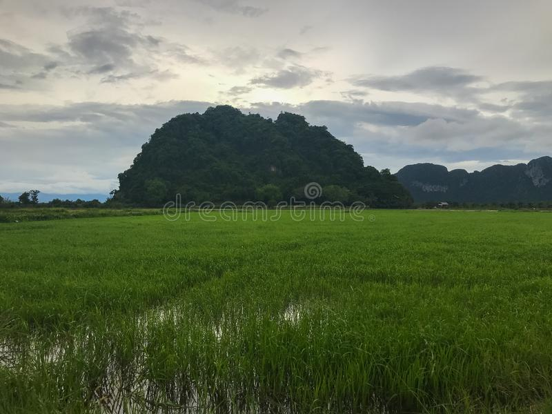 Mountain and rice field at Phatthalung. Thailand stock photos