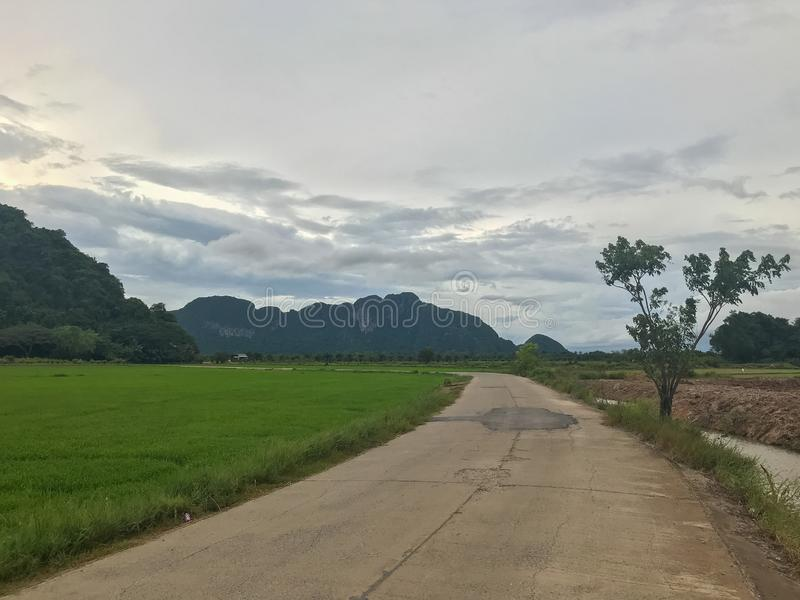 Mountain and rice field at Phatthalung. Thailand royalty free stock photos