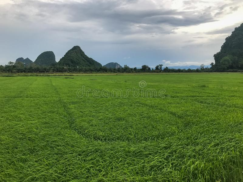 Mountain and rice field at Phatthalung. Thailand stock photography