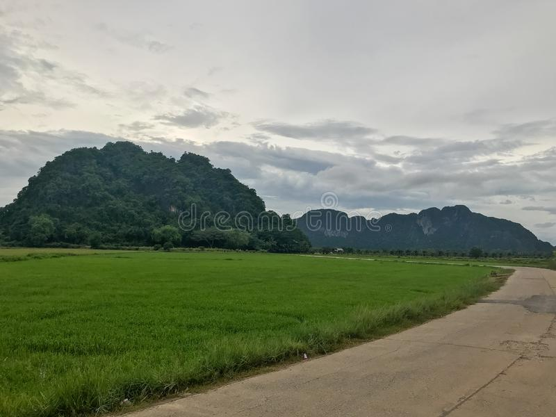 Mountain and rice field at Phatthalung. Thailand stock images