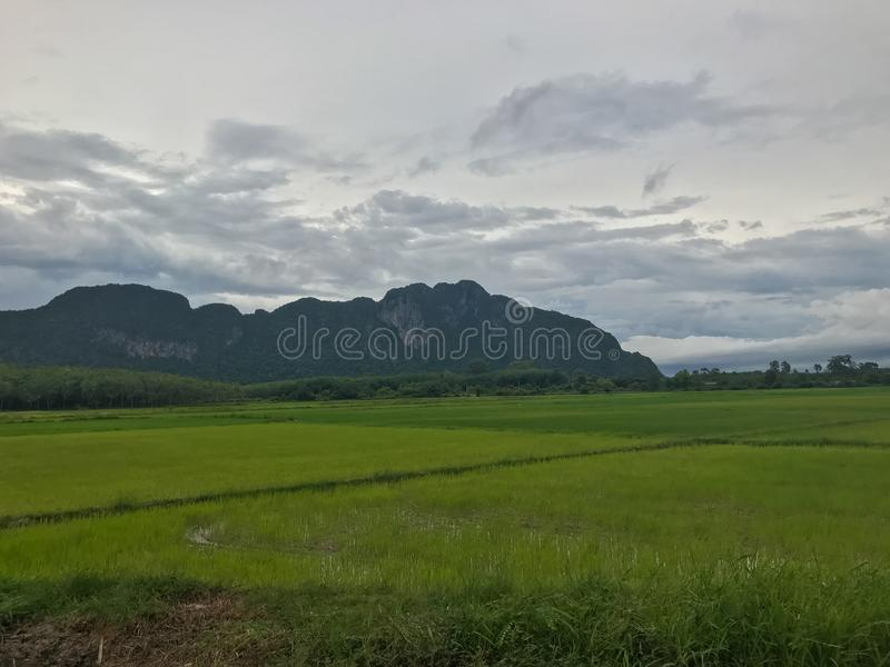 Mountain and rice field at Phatthalung. Thailand stock image