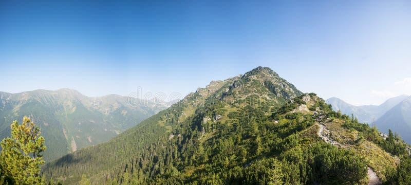 Mountain ridge with trees stock photos