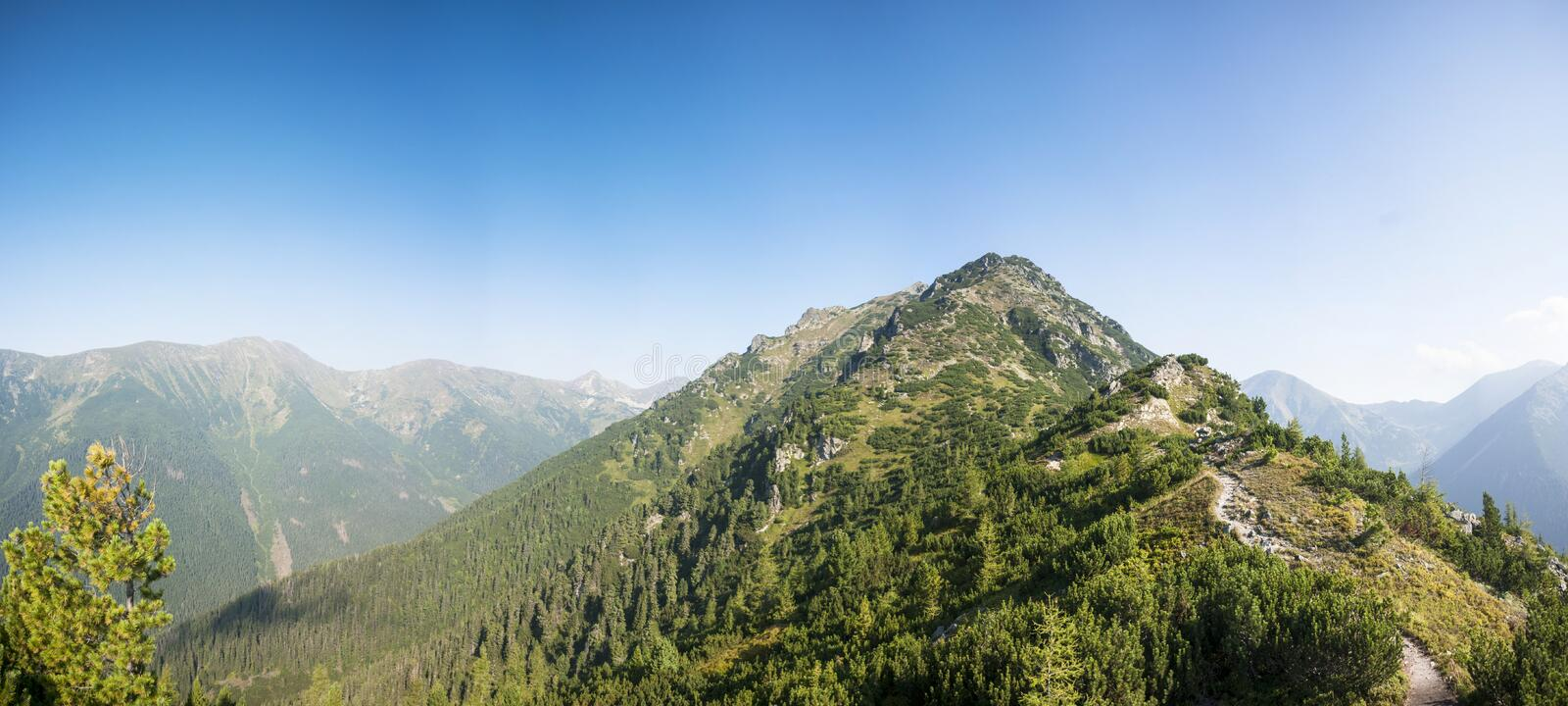 Mountain ridge with trees royalty free stock photography