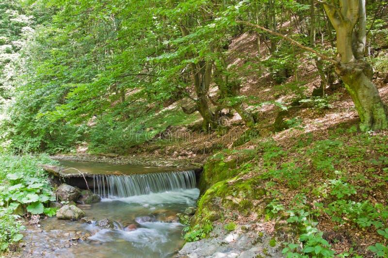 Download Mountain River stock image. Image of rural, natural, mountain - 15513955