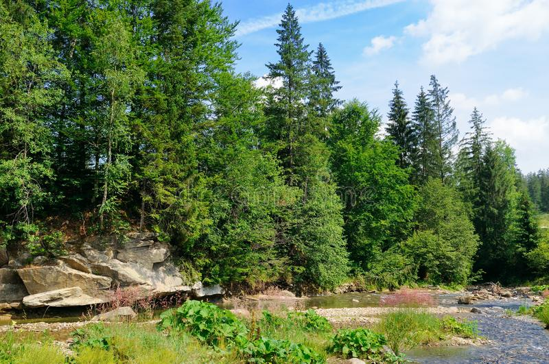 Mountain river and coniferous forest on a rocky shore. Location royalty free stock photos