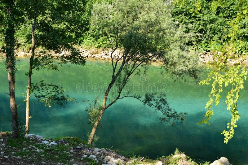 Green mountain river Drina with surrounding trees. The mountain river Drina colored by reflection of the green surrounding trees royalty free stock photos