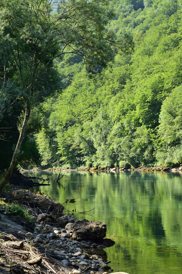 Green mountain river Drina with surrounding trees. The mountain river Drina colored by reflection of the green surrounding trees stock photo
