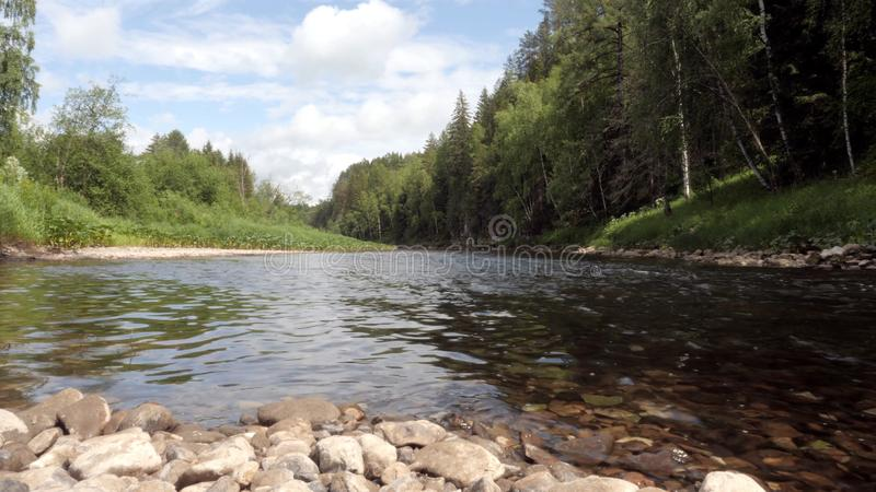 Mountain river flowing on background of green forest. Stock footage. Streams of mountain river calms and fills with royalty free stock photography