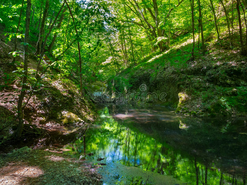 Download Mountain River Flowing Through The Forest Stock Photo - Image: 36057614